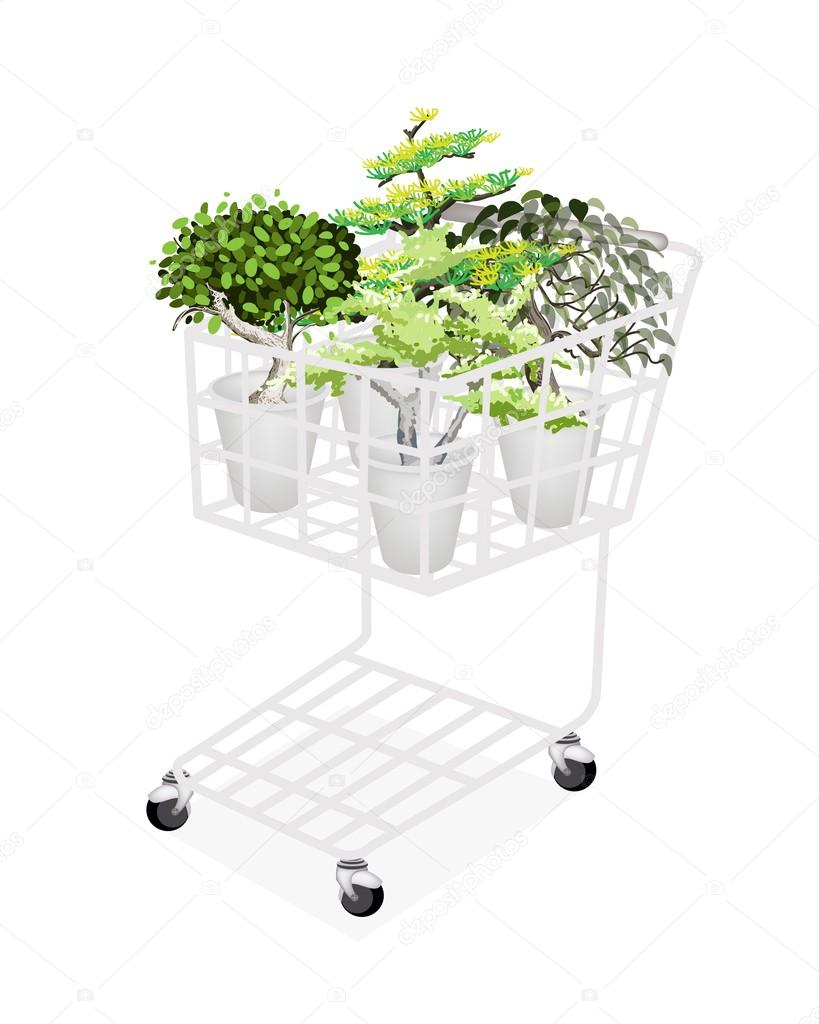 Green Trees and Plants in Shopping Cart