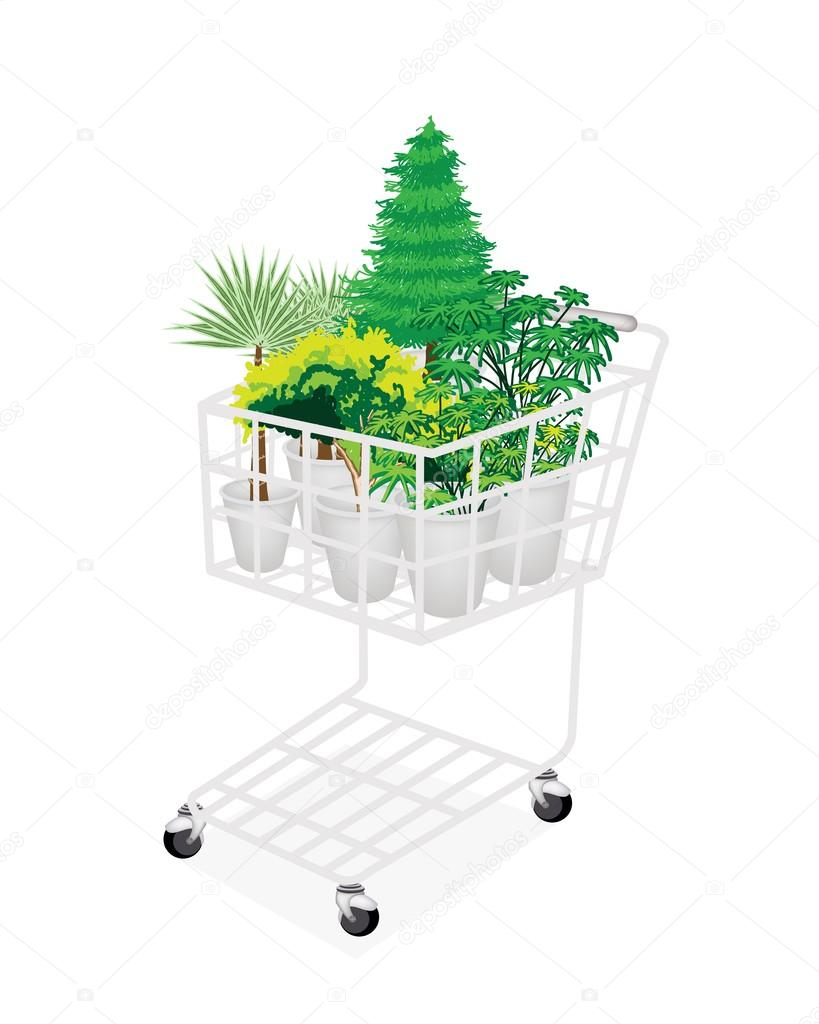 Green Trees and Plants in A Shopping Cart