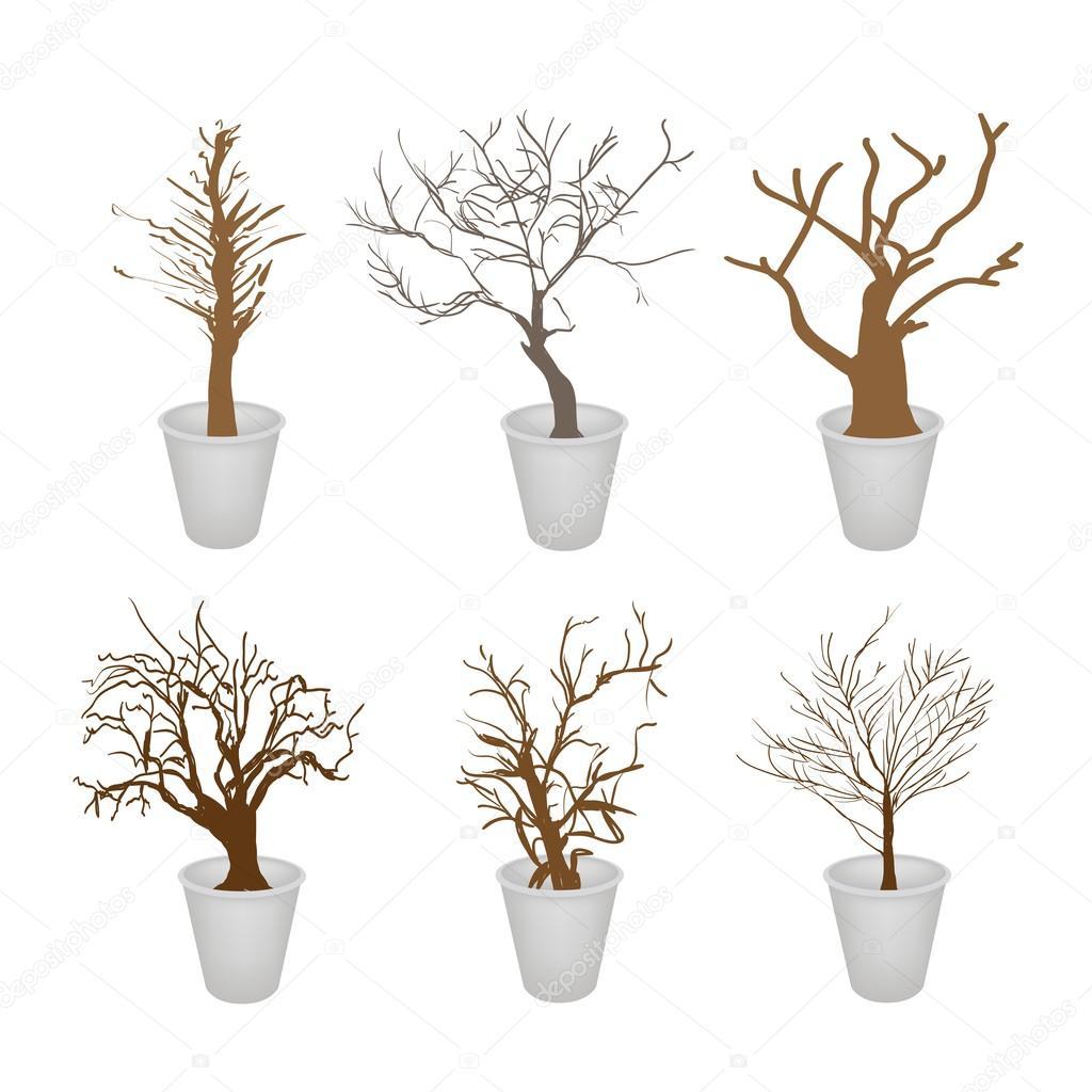 un color marrn coleccin ilustracin de paisajismo smbolos o isomtricos rboles y plantas en maceta para la decoracin del jardn u vector de iamnee