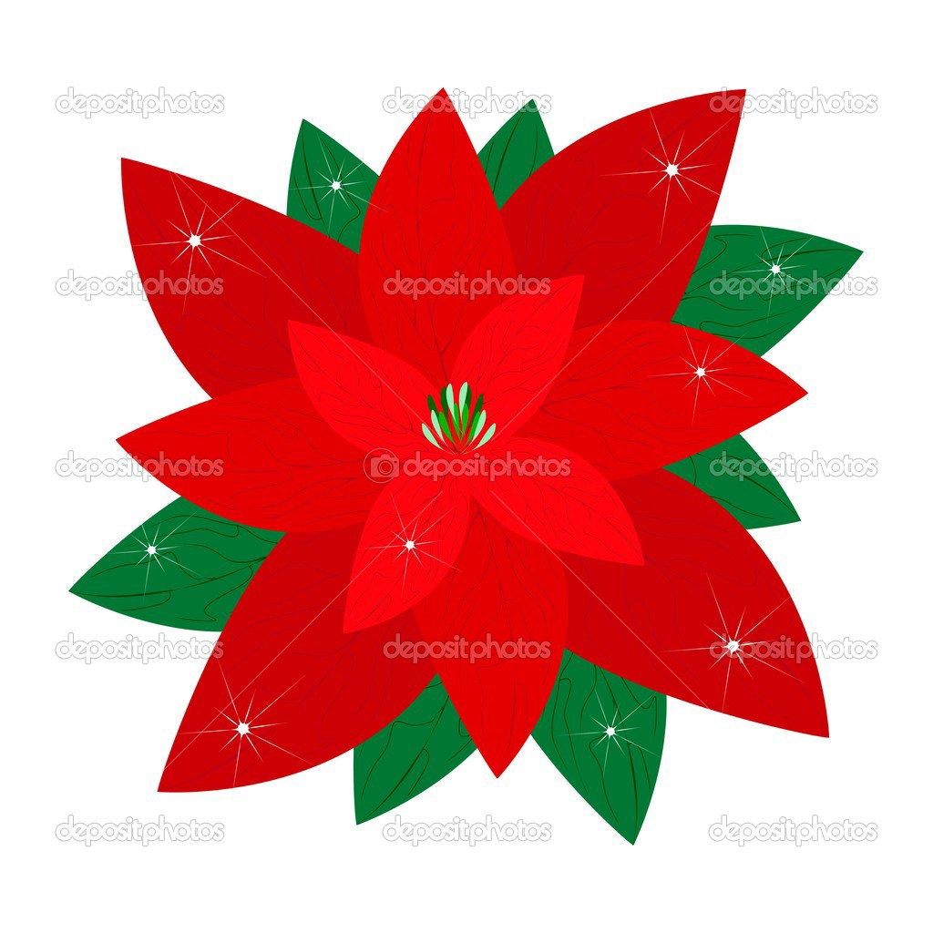 rot weihnachten weihnachtsstern Blume auf weißem Hintergrund ...