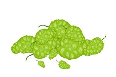 A Heap of Green Noni or Morinda Fruits