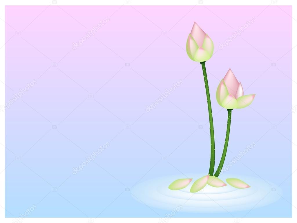 flor de loto rosa en rosa con fondo azul — Archivo Imágenes ...