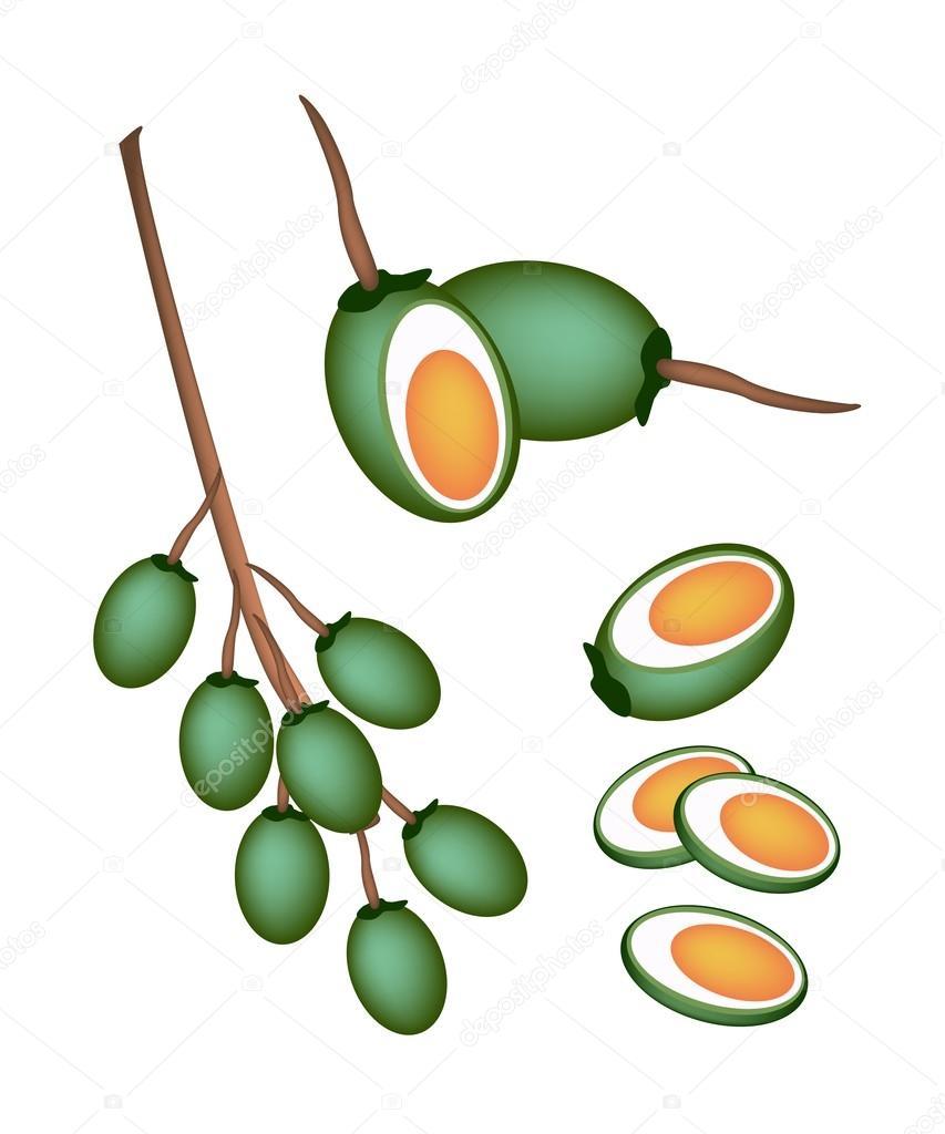 Green Areca Nut Fruit on White Background