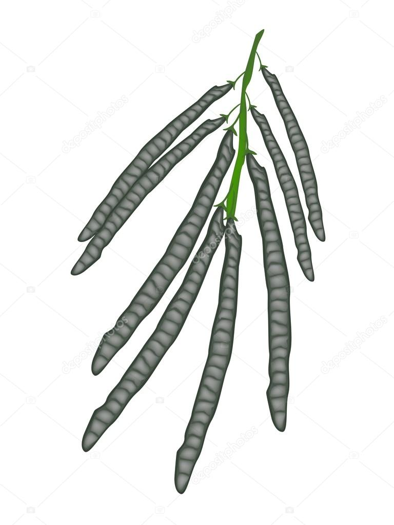 Delicious Ripe Mung Beans on A Twig
