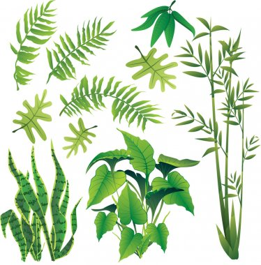 Exotic plant leaves design element vector collection set stock vector
