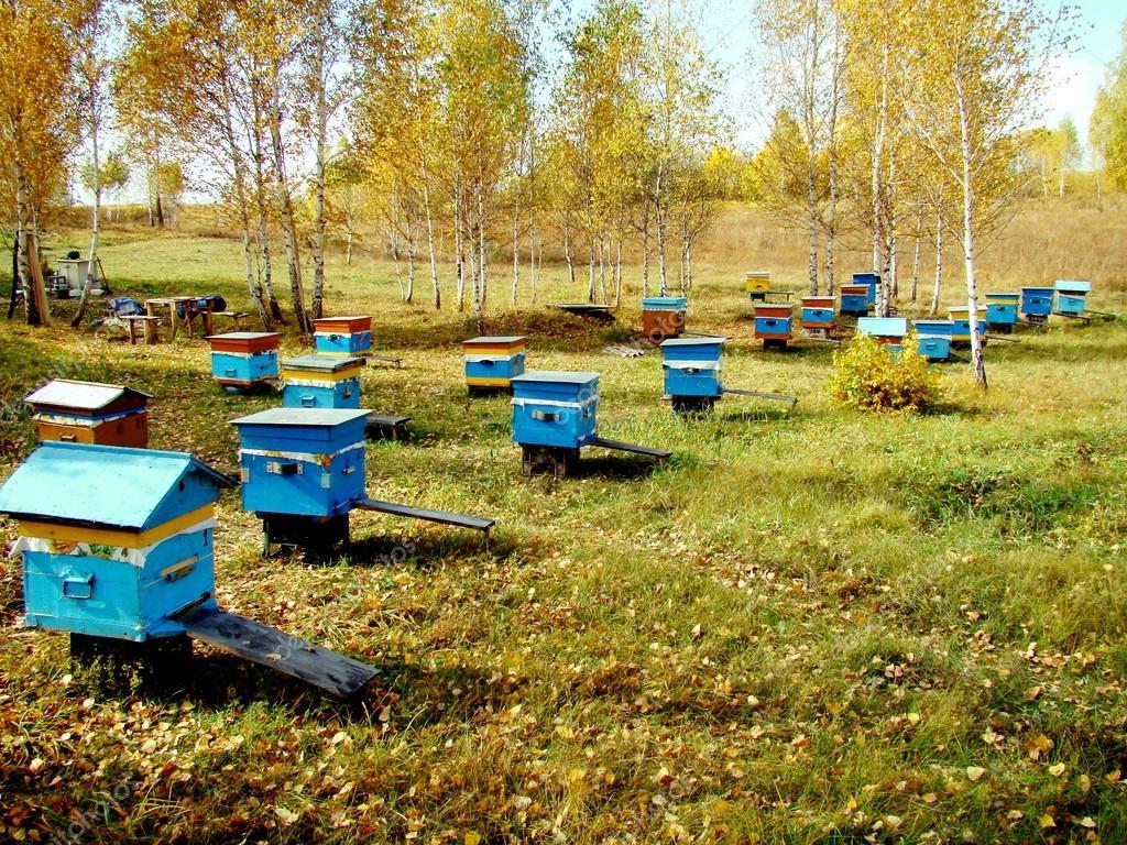 Beekeeping of Altai