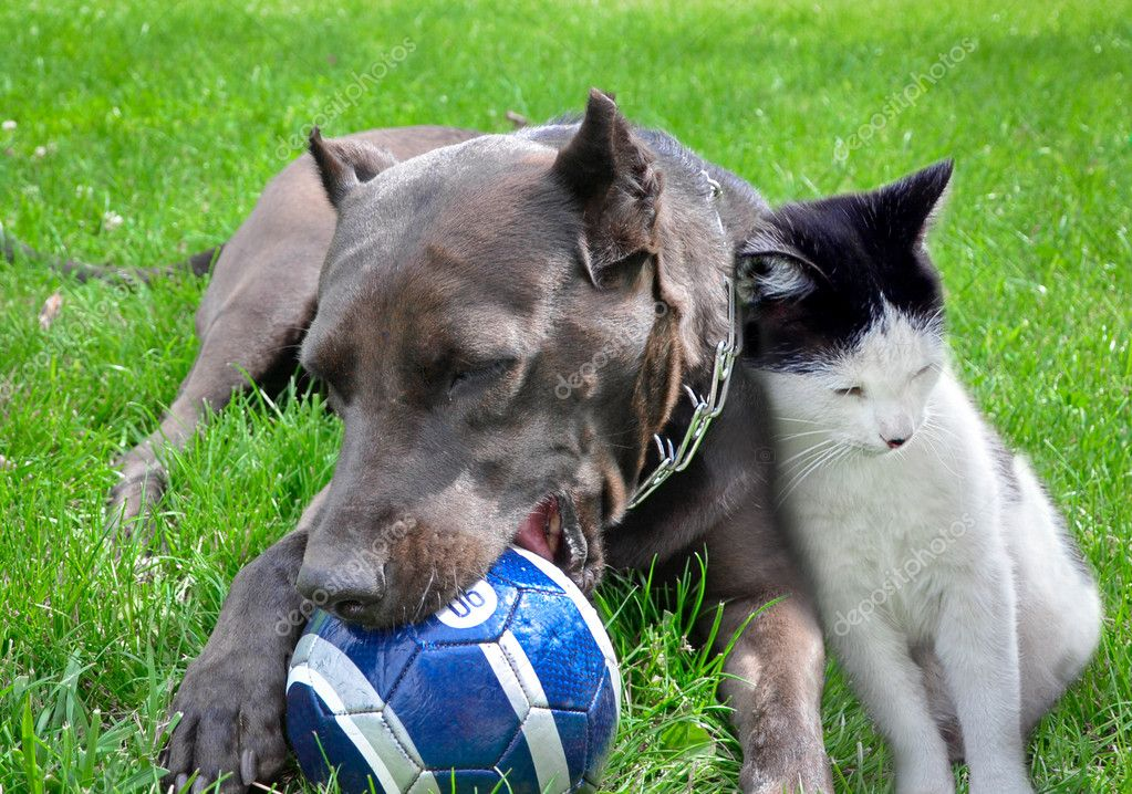A dog and cat play a ball together