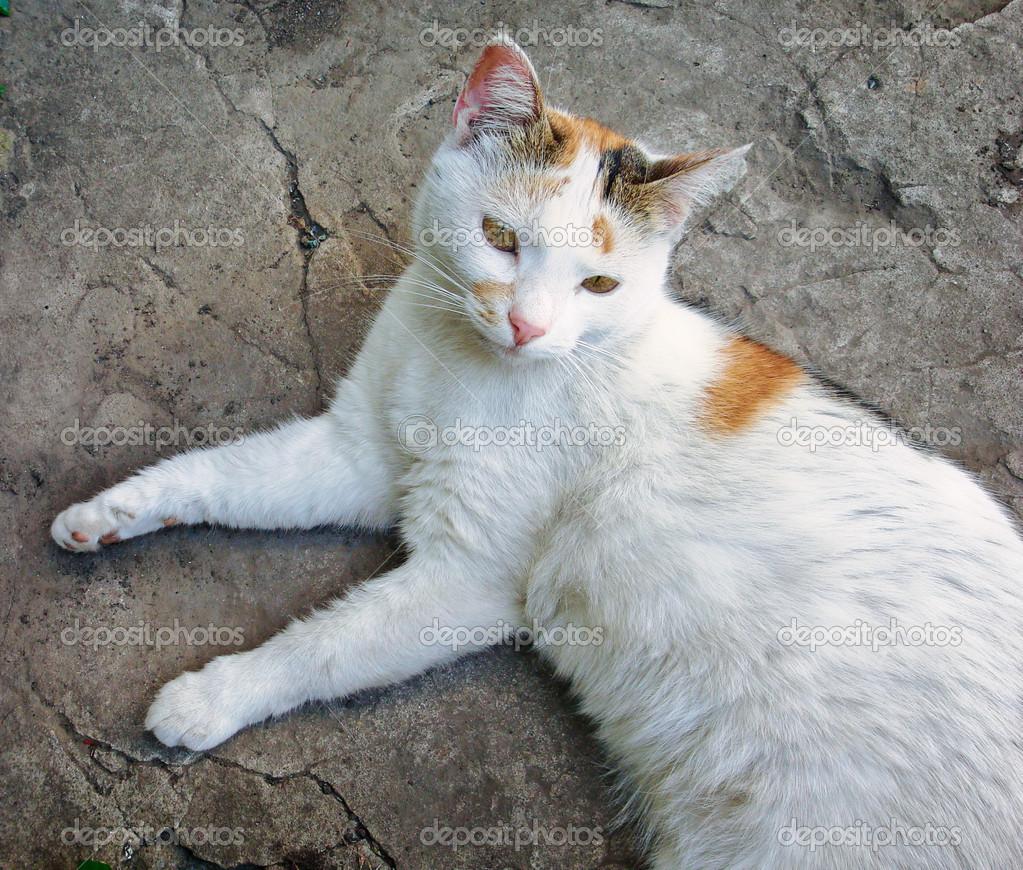 White сat lying on stone