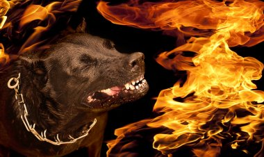 Portrait of a dog with a wicked grin growl in flames