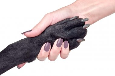 Friendly handshake of woman and dog