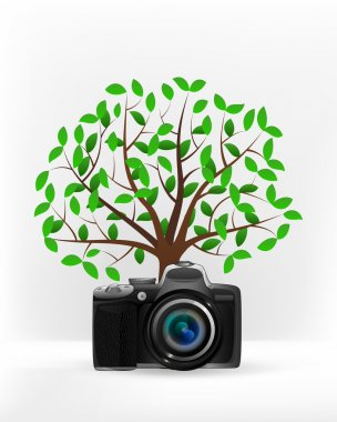Camera shot in front of green tree