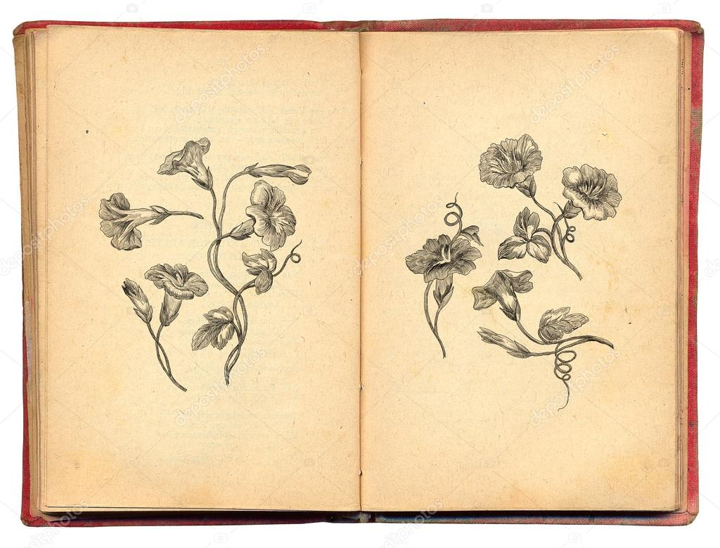 Old Book With Flowers Illustration Stock Photo