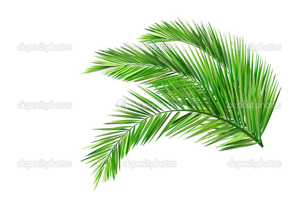 palm leaves stock vector  u00a9 baoyan 27394021 palm leaf clip art printable palm leaf clip art black & white