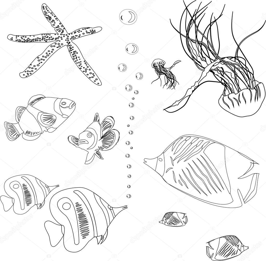 Kızıl Deniz Balık Koleksiyonu Denizanası Deniz Yıldızı Boyama