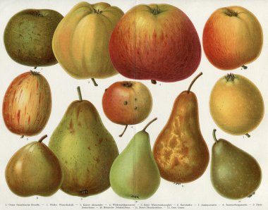 Different varieties of apples and pears. Publication of the book