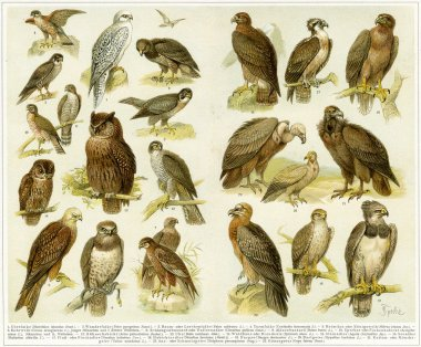 Various birds of prey. Publication of the book