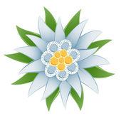 Fotografie Edelweiss (Leontopodium alpinum)
