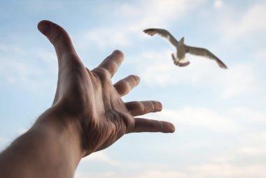 Hand of a man reaching to bird.