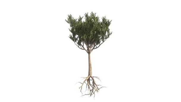 rostoucí strom