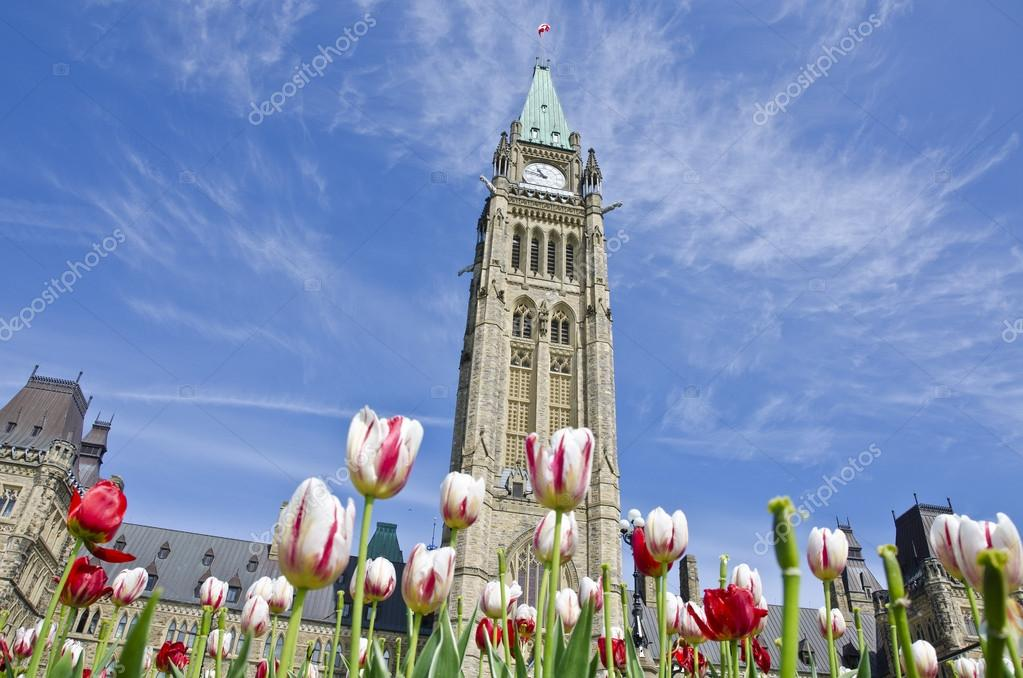 Parliament Hill (Ottawa) and Tulips