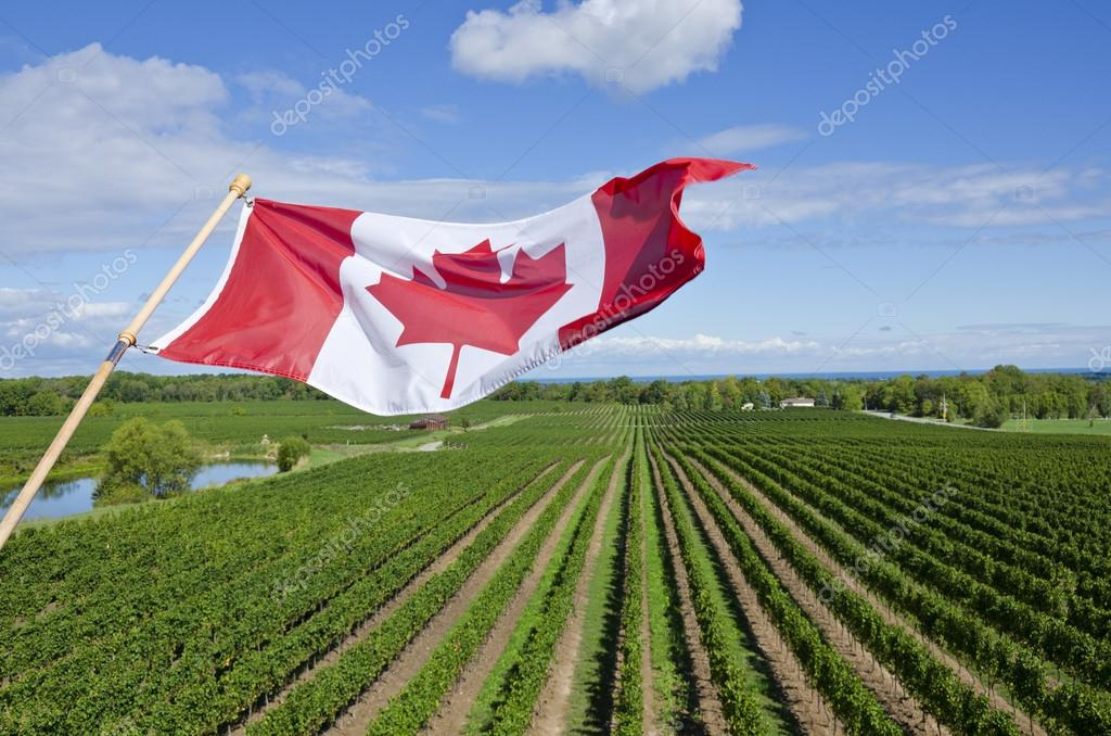 wine industry in canada What the wine industry tells us about us-china trade tensions.