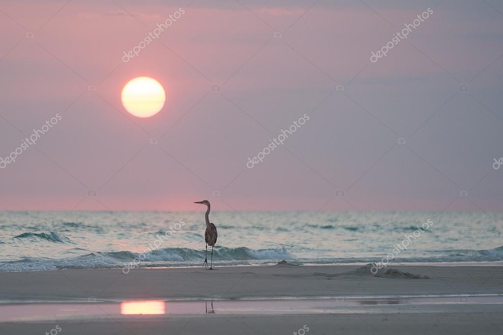Heron relaxing at sunset