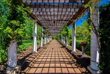 Garden Lattice walkway with stone pavers and vine flowers throug