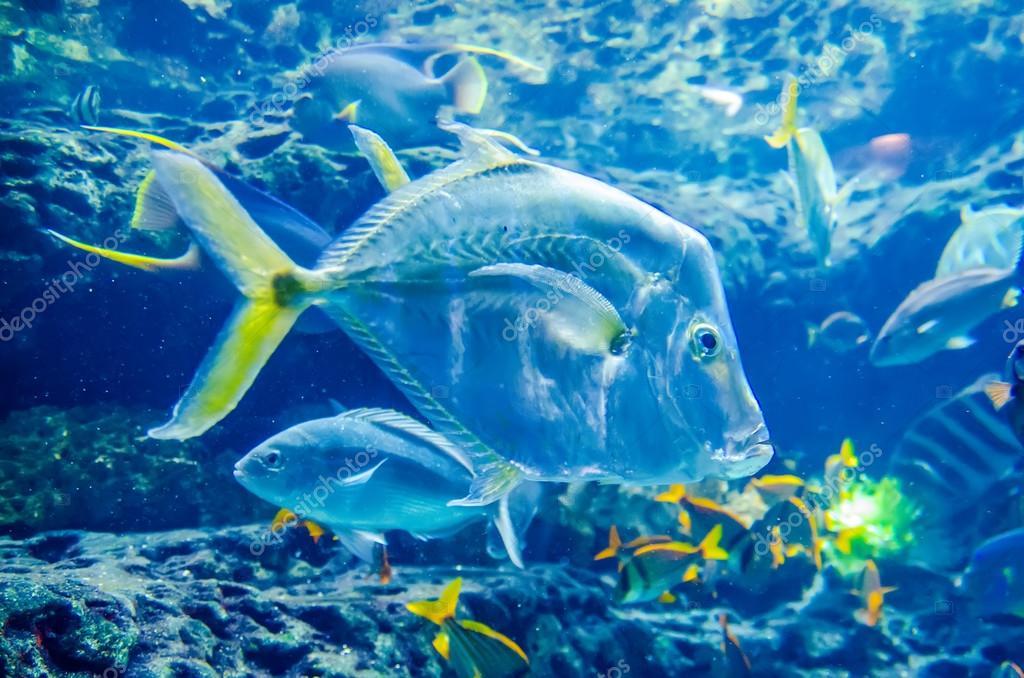 Salzwasser fische im meer oder im aquarium stockfoto for Salzwasser aquarium fische