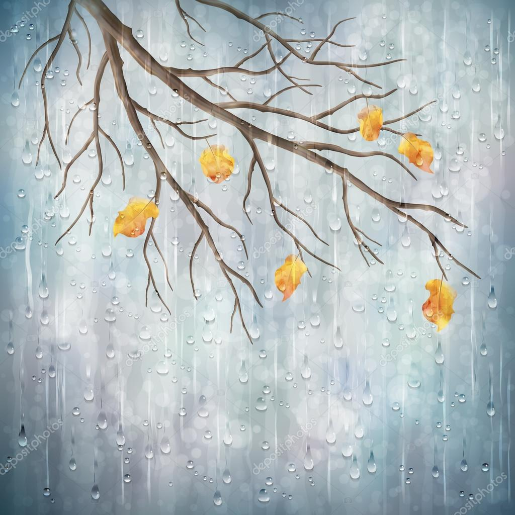 Autumn season rainy weather artistic design. Tree branch, yellow leaves, transparent water drops on foggy gray blur natural wallpaper background. Beautiful wet autumn fall realistic vector landscape