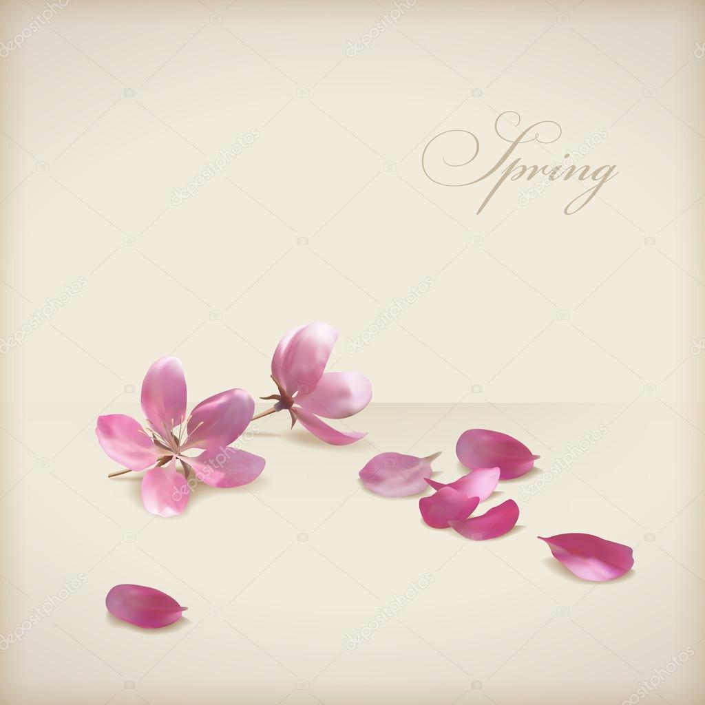 Floral vector cherry blossom flowers spring design. Pink flowers, freshly fallen petals and text 'Spring' on a beige background in modern style. Can be used as wedding, greeting or invitation card