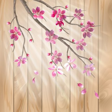 Spring cherry blossom flowers on a wood texture. Floral artistic vector design with beautiful pink cherry (plum) blooming flowers, tree branch, fall petals, sun rays, light effect on a wooden fence
