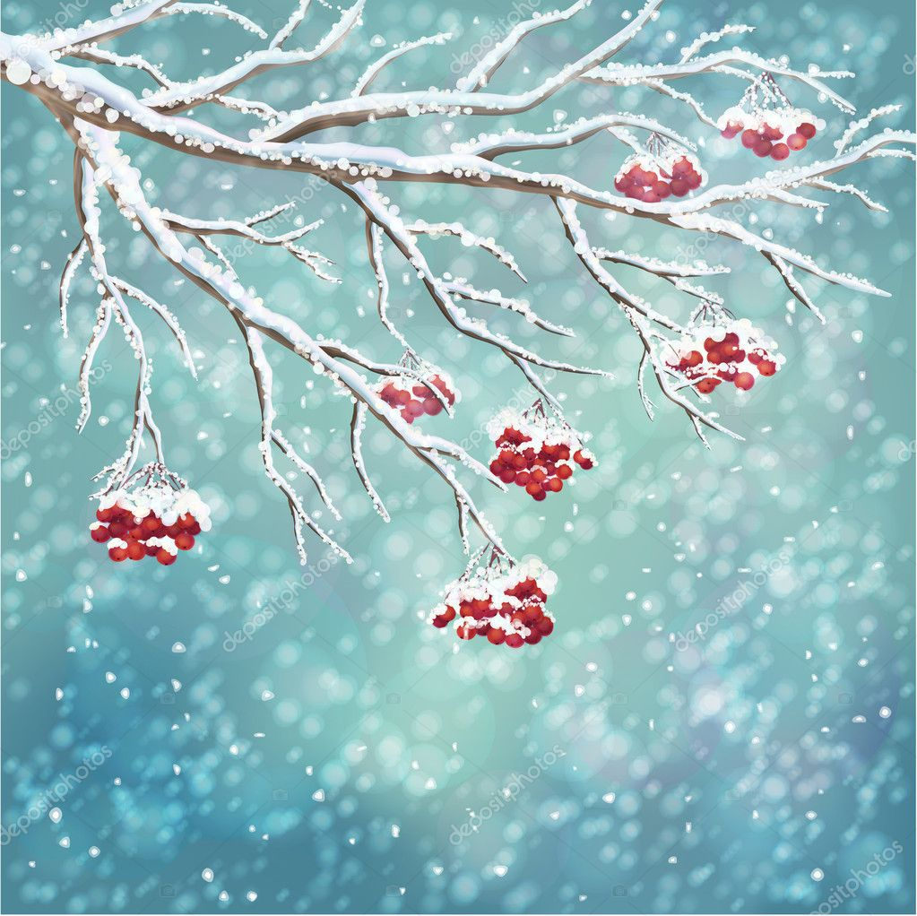 Winter snow-covered rowan berry branch background