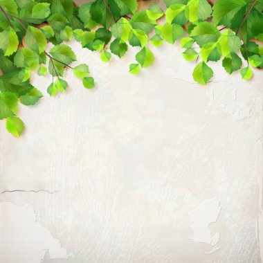 Vector season background with tree branches, green leaves, decorative white plaster wall backdrop with subtle delicate grunge texture of surface stock vector