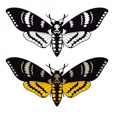 Death's head hawk moth