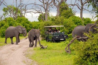 Elephant safari(Botswana)