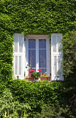 Provence window with white shutters and ivy, Provence, France