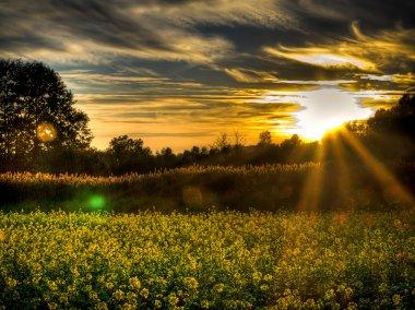 Beautifull sunset upon polish fields