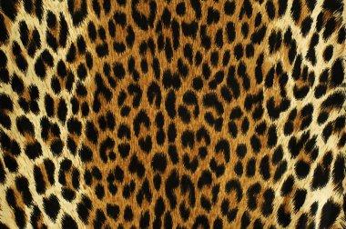 Black spots of a leopard