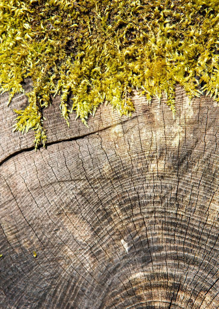 Cross section of a tree trunk