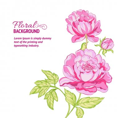 Pink peonies background with sample text