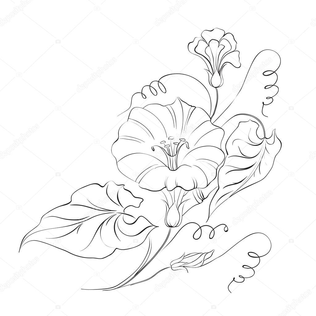 Dibujos Enredaderas Blanco Y Negro Flor Enredadera En