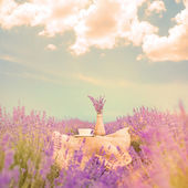 Lavender composition on field.