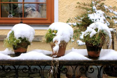Potted plants with snow