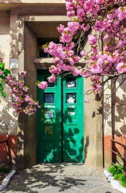 sakura tree blooms in front of door