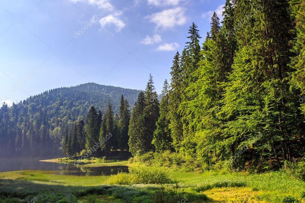 Фотообои Озеро в горах в окружении соснового леса