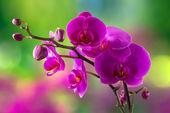 Fotografie fialová orchidej květina na rozostření pozadí