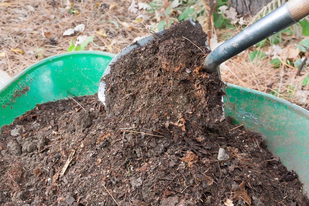 Shovel Pours Compost into Wheelbarrow