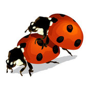 Photo Ladybugs