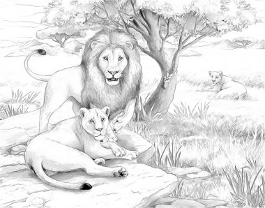 Safari - lions - coloring page- illustration for the children
