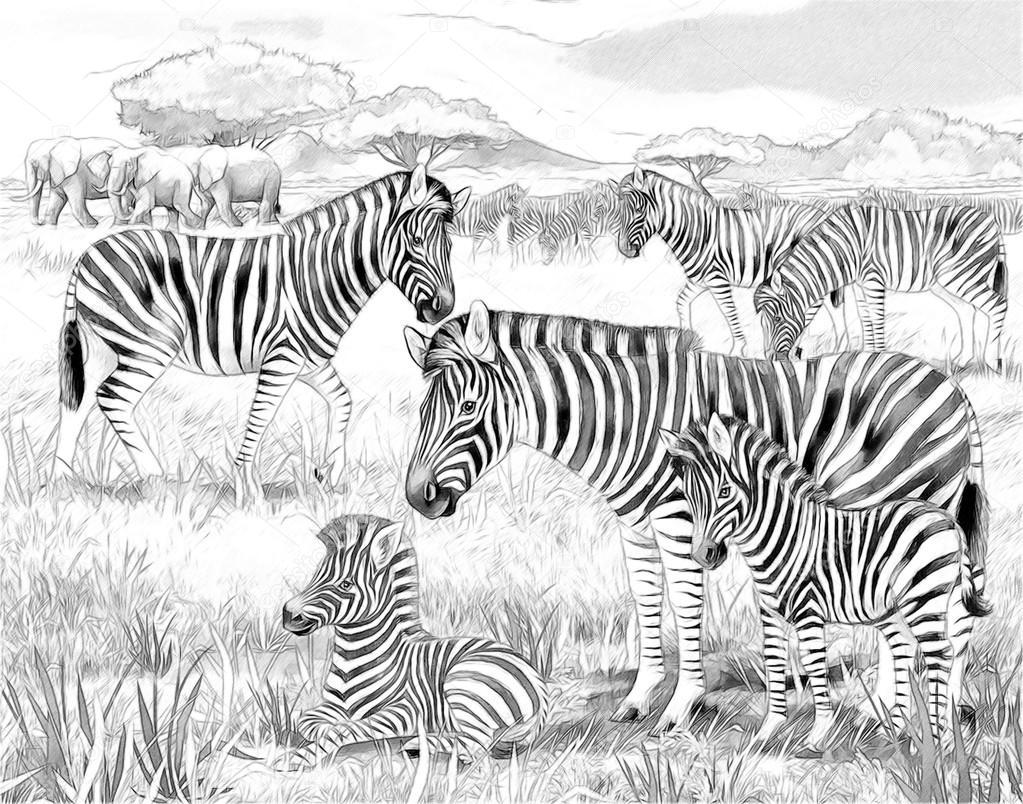 Fotos Cebras Para Colorear Safari Cebras Y Elefantes